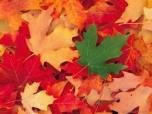 """Seminaras """"Žaidimai ir kūryba su rudens lapais"""""""