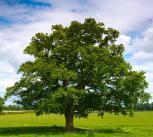 """Kvietimas dalyvauti respublikinėje nuotraukų parodoje """"Mums rūpi medis"""""""