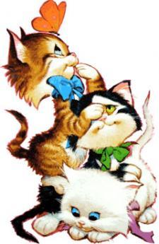 """Spalvinimo knyga """"Katės"""""""