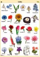Gėlės. Plakatas