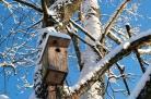 Žiema ir inkilėliai paukšteliams