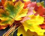 Vaikai kūrė rudeninių lapų istorijas